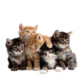 Cutest Cat Dog Videos